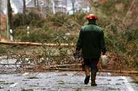 Schwierige Rettung: Waldarbeiter wird von Baumstamm am Bein getroffen