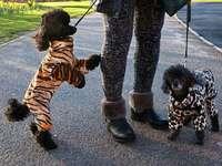 Fotos: Crufts – Weltweit größte Hundeschau in Birmingham