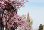 Fotos: So farbenfroh blüht Freiburg zum Frühlingsbeginn auf