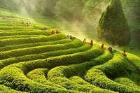 Bunte Markthallen, grüne Teeplantagen: Südkorea ist ein Land der Gegensätze