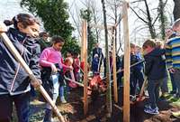 Martin Haag pflanzt Baum des Jahres im Dietenbachpark