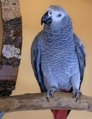 Papagei schimpft auf Bayerisch