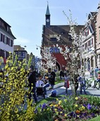 Lust auf Frühling