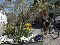 Fotos: Frühling im Südlichen Breisgau