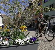 Der Frühling lässt alles erblühen und bringt den ersten Spargel