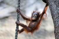 Zoos tauschen Tiere aus Angst vor dem Brexit