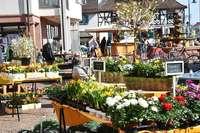 In Gundelfingen findet der Frühlings- und Fahrradmarkt statt