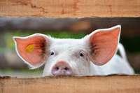 Mehr Klarheit beim Fleischeinkauf