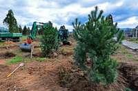 Mammutwald im Freiburger Seepark wird durch neue Baumvielfalt ersetzt