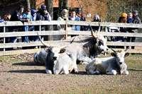 Tiergehege am Limit: Freiburg will den Mundenhof vergrößern