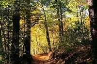Erlebnis Waldbaden zum BZ-Card-Preis von 25 statt 35 Euro