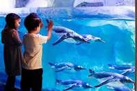 40 Prozent BZ-Card-Rabatt beim Sea Life Konstanz in den Osterferien