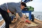 Fotos: Spargelernte beim Bio-Bauern in Schallstadt