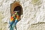 Fotos: Bienenfresser und Turmfalken am Tuniberg