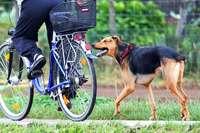 Hund beißt Radler an der Dreisam in den Oberschenkel