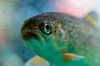 Fisch statt Fleisch: Experten geben kulinarische Tipps für Ostern