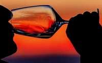 Ein Lob der Weinlyrik