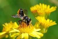 Wildbienen-Lehrgarten am Tuniberg ist bald öffentlich zugänglich