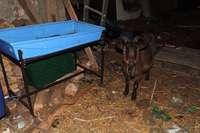 Kreis bezieht Stellung zu Fund verwahrloster und toter Tiere in Linx