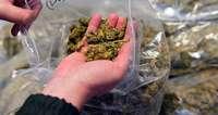 Mehrere Tonnen Cannabis in Lkw im Elsass beschlagnahmt