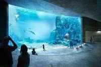 Basel streitet um ein Großaquarium für rund 90 Millionen Euro