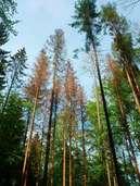 Forstexperten sehen den Schwarzwald in Gefahr