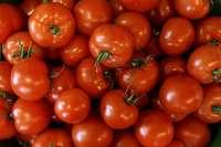 Junge Offenburger im Tomatenfieber