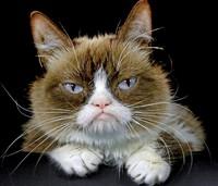 Die mürrischste Katze der Welt ist tot