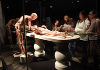Körperwelten-Ausstellung in Freiburg eröffnet – großer Andrang