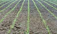 Stadt Freiburg startet Kooperation mit Landwirten zum Erhalt der Biodiversität
