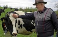Warum nur noch wenige Kühe Hörner haben – und wofür sie sie brauchen