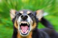 Hund beißt Radlerin in den Oberschenkel