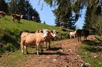 Diese Höfe betreiben Rinderzucht nach ökologischen Richtlinien