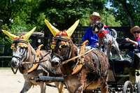 Beim Eselfest am Mundehof kamen 40 Gast- zu 10 Stammtieren dazu
