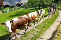 Weiden im Münstertal werden ab 2020 privatwirtschaftlich betrieben