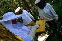 Beim Insektentag gab es in Minseln Einblick in die Bienenhaltung