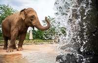 So unterschiedlich werden Elefanten in der Region gehalten