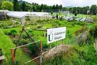 Die Gärtnerei Hügin in Freiburg wird es wohl nur noch drei Sommer lang geben