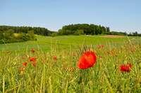 Der BUND Hochrhein fordert mehr Einsatz für den Artenschutz