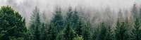 Wald und Mensch