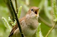 Worauf Nachtigallen fliegen: Haben Vögel einen Hang zum Luxus?