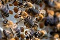 In Friesenheim-Oberweier ist ein Bienenstock abgebrannt