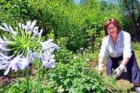 Anwohner in Vauban haben ein Paradies für Schmetterlinge erschaffen
