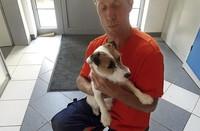 Jack-Russell-Terrier gefunden
