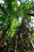 Wie sich der Klimawandel im Stadtwald Bonndorf bemerkbar macht