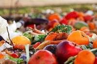 Wieso essen Menschen das, was andere wegwerfen?