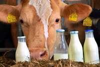 Immer mehr Kunden wollen Milch in Flaschen