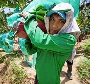 Fairtrade wirkt nicht richtig