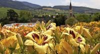 Taglilientage in Sulzburg-Laufen