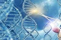 Russischer Forscher will Embryonen genetisch verändern